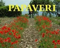 Papaver Rhoeas Rosolaccio