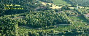 olivicoltura viticoltura