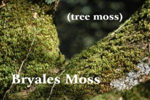 muschio degli alberi