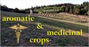 Coltivazione di piante medicinali per produzione di estratti a scopo farmaceutico