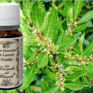 Pure Laurel essential oil for food and pharmaceutical uses